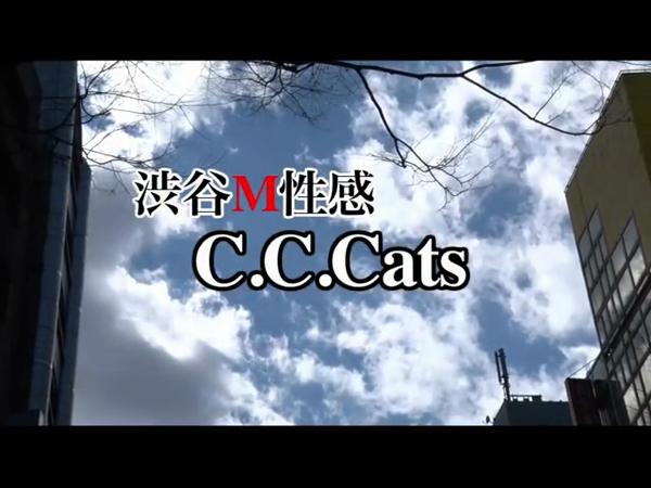 C.C.Cats(シーシーキャッツ)のお仕事解説動画