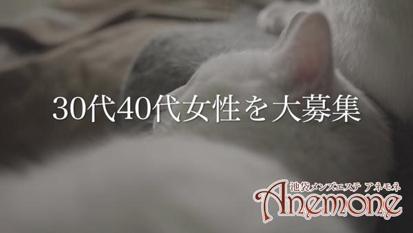 池袋 アネモネのお仕事解説動画