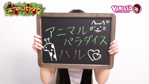 アニマルパラダイスのお仕事解説動画
