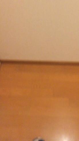 SAKURA~サクラ~の求人動画