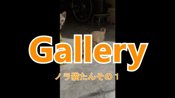 Gallery (ギャラリー)の求人動画