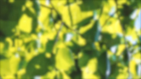 Candle pot(キャンドルポット)の求人動画