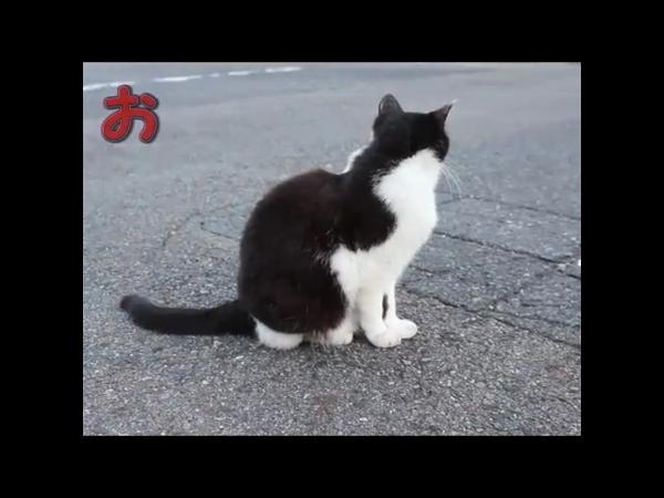 Love Charm(ラブチャーム)の求人動画