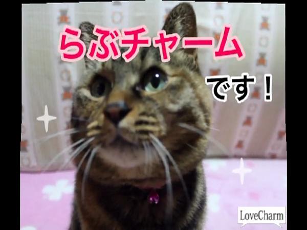 Love Charm 小牧・一宮店の求人動画