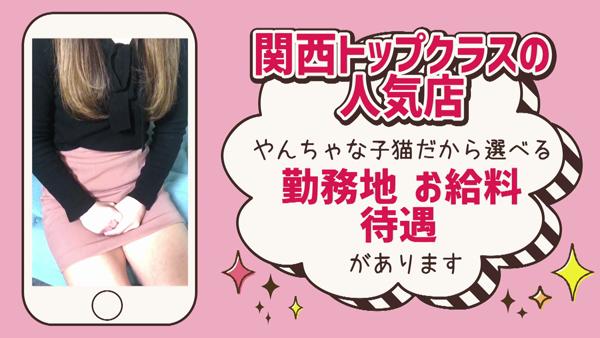 やんちゃな子猫 京橋店のお仕事解説動画